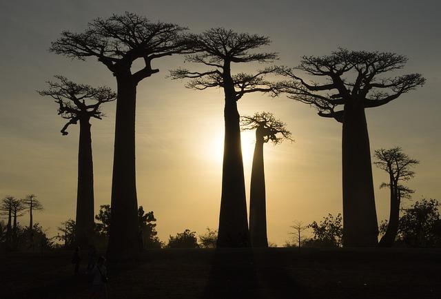 טיול מושלם למדגסקר